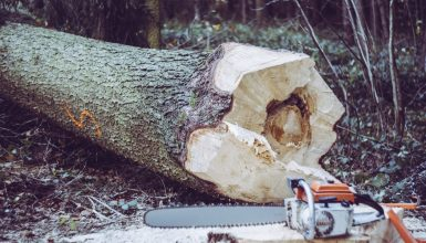 How To Run A Chainsaw? Chainsaw Operations For Beginners